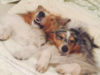 15 Dogs That Know Exactly What It's Like To Be You In Bed