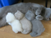 20 Proud Cat Mothers With Their Adorable Kittens