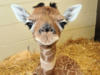17 Baby Animals You Never Knew Could Be So Cute