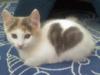 15 Cats Who Have Amazingly Unique Fur Patterns